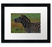 Snorting Zebra - Coloured Pencil Framed Print