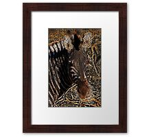 Zebra I - Coloured Pencil Framed Print
