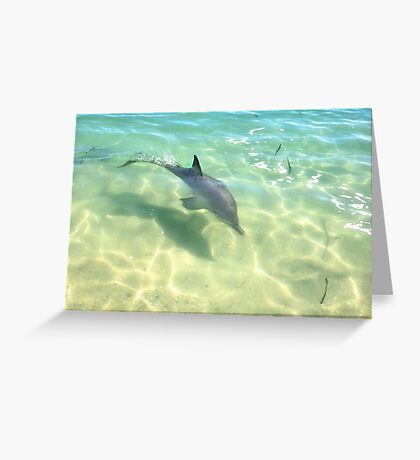 Samu 3 , Monkey Mia, Shark Bay Greeting Card