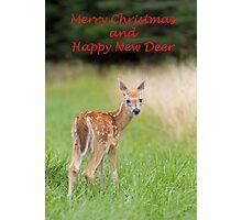 Christmas fawn Photographic Print