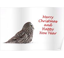Christmas Great Grey Owl Poster