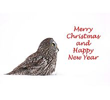 Christmas Great Grey Owl Photographic Print