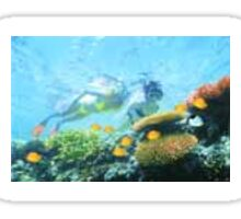 Good diving pic Sticker