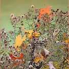 Goldfinch with Autumn Leaves in the Aster Fluff by TrendleEllwood