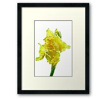 yellow gladiolus Framed Print