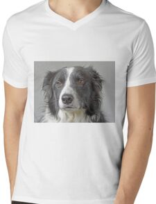 Border Collie Dog Portrait Mens V-Neck T-Shirt