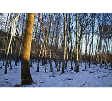 Winter Woods at Castle Fraser Photographic Print