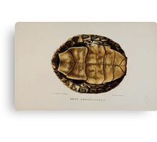 Tortoises terrapins and turtles drawn from life by James de Carle Sowerby and Edward Lear 039 Canvas Print