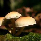 Mushroom Trio by Anthony Thomas