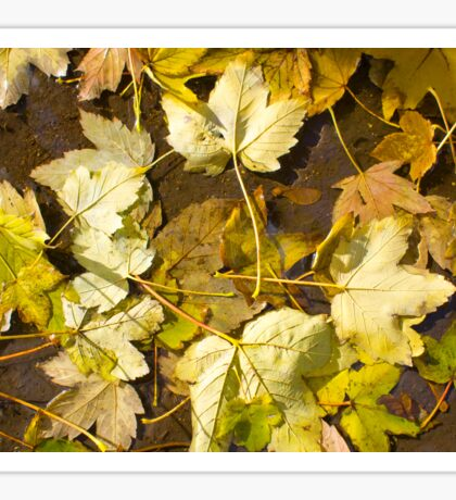 Top view of a wet autumn leaves Sticker