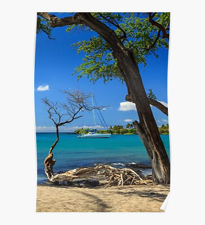 A Sailboat In Anaehoomalu Bay Poster