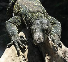 Crocodile Monitor by Vivian Sturdivant