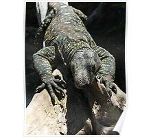 Crocodile Monitor Poster