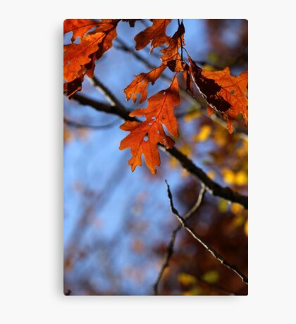 Fall Oak Leaves with Twig Canvas Print