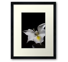 Pure in the Night Framed Print