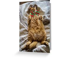 LB's Holiday Nap Greeting Card