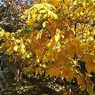 Autumn Colors, New York City by lenspiro