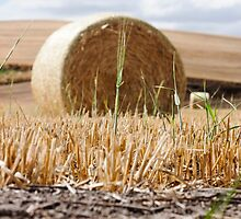 Wheat Bale Photo by griffingphoto