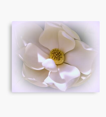 Southern Magnolia Canvas Print