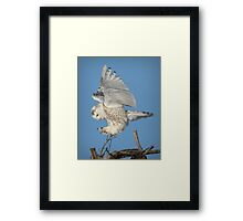 Graceful landing Framed Print