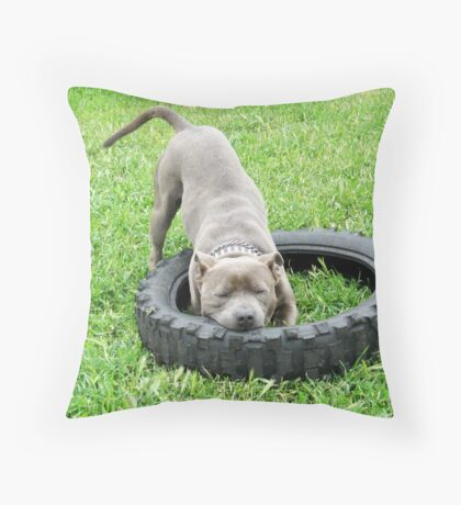 Staffordshire Bull Terrier, One Chomp Or Two. Throw Pillow