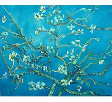 Almond blossoms  Vincent Van Gogh Photographic Print