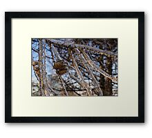 Christmas Decorations by Mother Nature - Three Pine Cones Encapsulated in Ice Framed Print