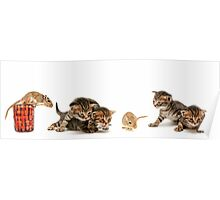 one week old kittens in various poses of enquiry with a mouse  Poster