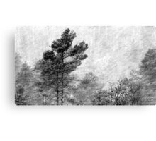 9.11.2016: Pine Trees in Snowstorm Canvas Print