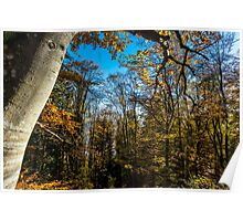 Colorful autumn forest view, Alsace, France Poster