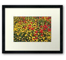 Spring wild flowers Framed Print