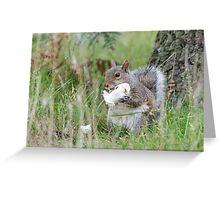 Eastern Grey Squirrel (Sciurus carolinensis) tucking into a tasty mushroom. Greeting Card
