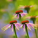 Three Coneflowers by Veikko  Suikkanen