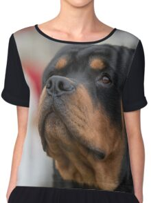 Head shot of Rottweiler .Selective focus on the dog Chiffon Top