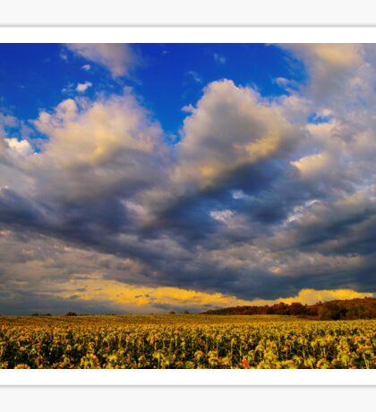 Sunflowers field under the storm light Sticker