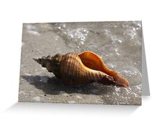 Sea Shells By The Sea Shore Greeting Card
