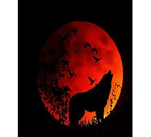 Wolf Howling in the dark for animal lovers Photographic Print