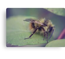 Soft Focus Canvas Print