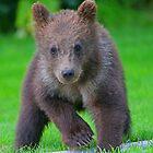 Bear Cub! by jozi1