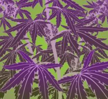 Purple Haze Medicinal Marijuana Cannabis Sticker