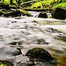 Return to Golitha Falls by Lissywitch