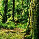 Golitha wood by Lissywitch