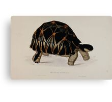 Tortoises terrapins and turtles drawn from life by James de Carle Sowerby and Edward Lear 003 Canvas Print