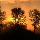 A Tree, A Silhouette, and a Sunrise.  ( 2 ) by Larry Lingard-Davis