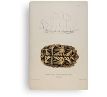 Tortoises terrapins and turtles drawn from life by James de Carle Sowerby and Edward Lear 009 Canvas Print