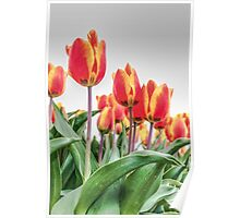 Dutch Tulips part 2 Poster