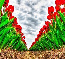 Dutch Tulips part 5 by AlexFHiemstra