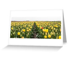 Dutch Tulips part 6 Greeting Card