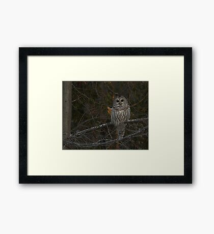My my what big eyes you have Framed Print