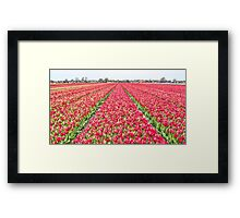 Dutch Tulips part 7 Framed Print